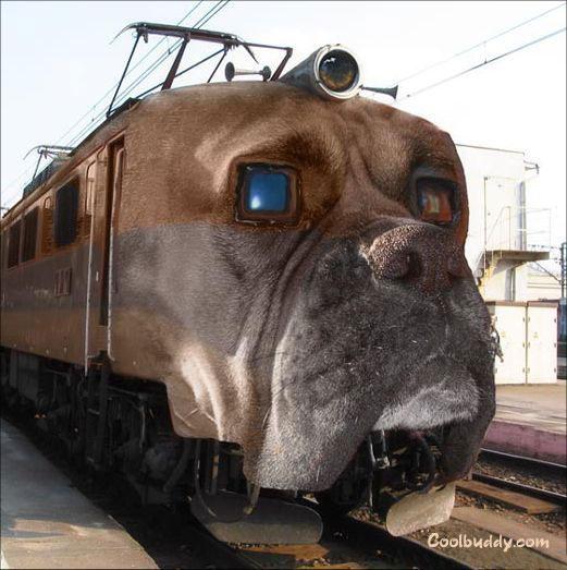صور قطار على شكل كلب