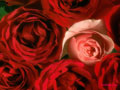 Love Flowers Wallpapers